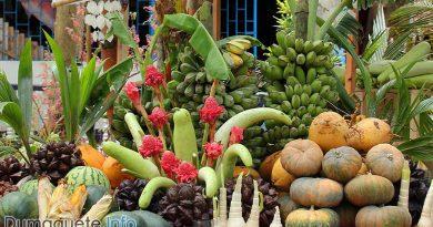 Organic Farmers Festival