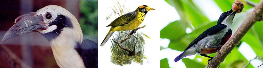 Birds of Negros Oriental
