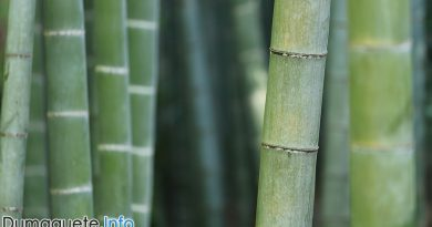 DTI Bamboo Expo in Dumaguete