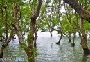 300,000 Mangroves for Negros '10M in 10 'Project