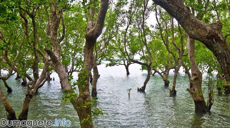 300,000 Mangroves - 10M in 10 for Greener Negros Project