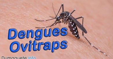 PHO to use Dengue Ovitraps